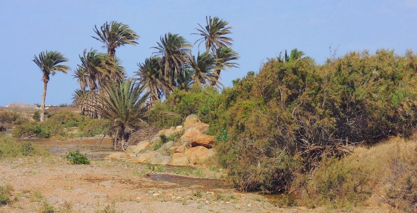 Een oase in de woestijn van Boa Vista. Alles op nog geen 4x Texel.