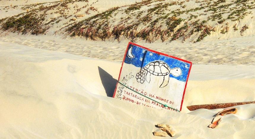 Zeeschildpadden leggen hun eieren van juni tot oktober op de brede stranden.