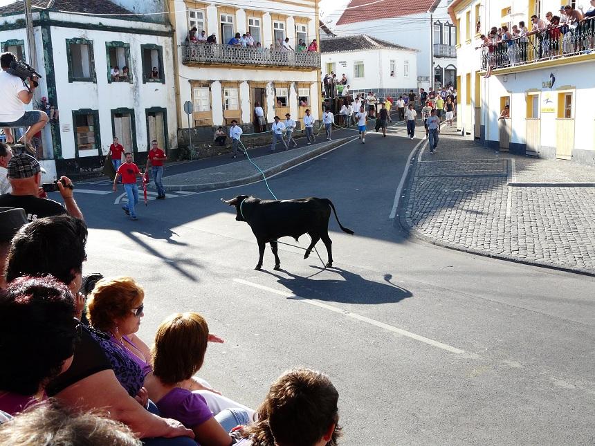 Stierenrennen in Ponta Judeu
