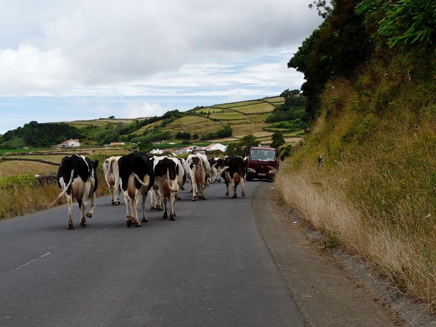 Wegversperring op Terceira