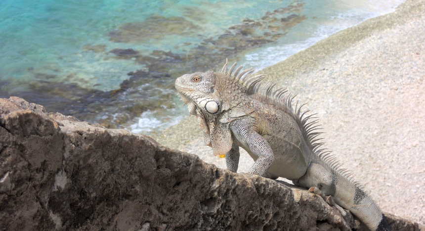 De natuur op Bonaire is mooi - ook boven water.
