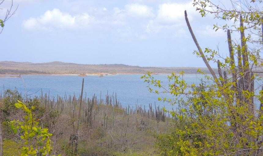 Het grote meer. Een lagune met brak water en veel flamingo's.