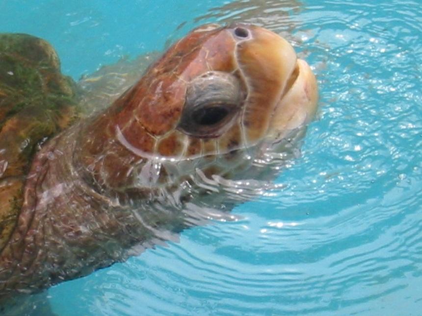Brazilie zeeschildpadden