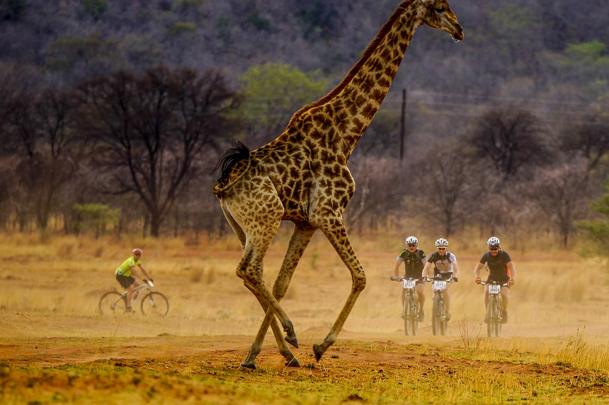 """Eerdere beelden van mountainbikers in de """"Save The Rhino 2-day MTB Ride"""", vlakbij de Mookgopong in de Limpopo Provincie, Zuid-Afrika"""