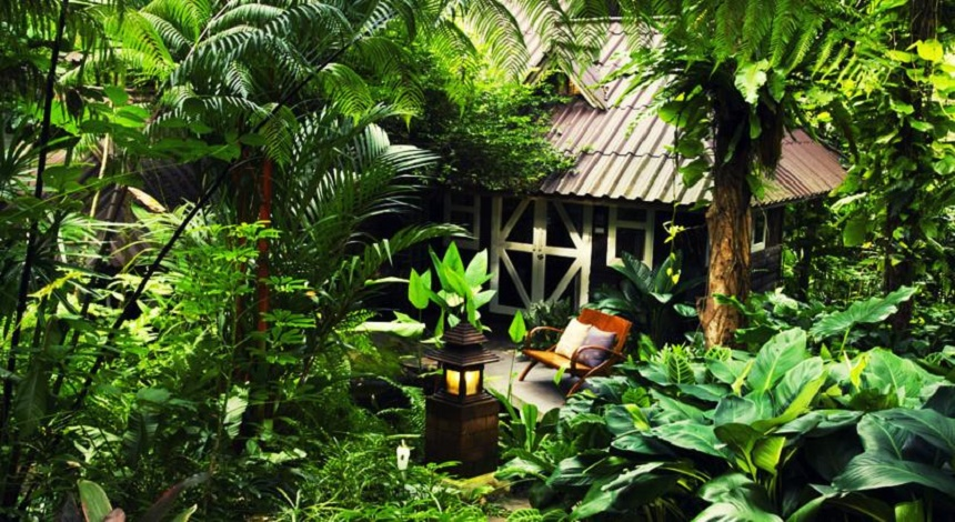 Rain Forest Resort Thailand