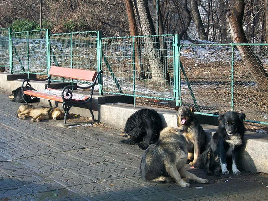 1Boekarest straathonden