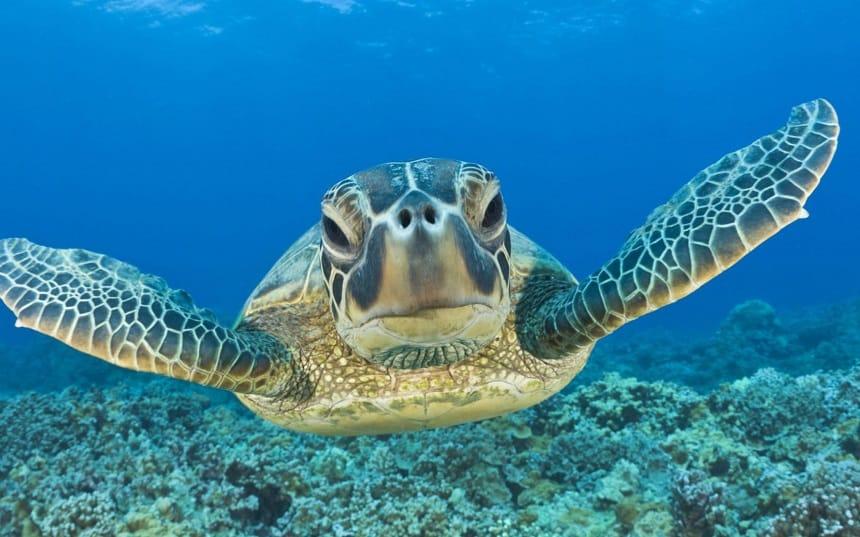 Akumal - snorkelen met zeeschildpadden