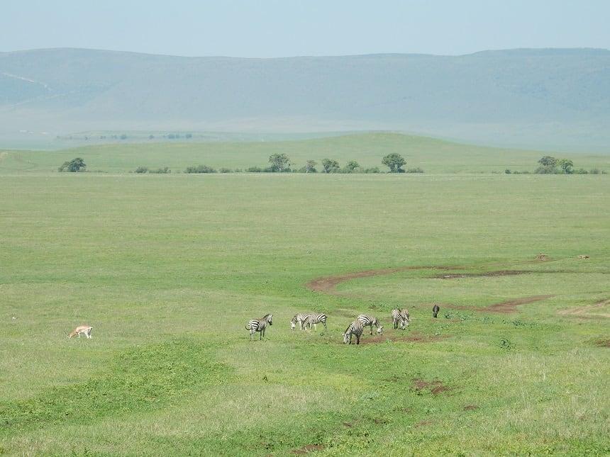 Waar je ook rijdt in de krater, overal zie je wilde dieren om je heen