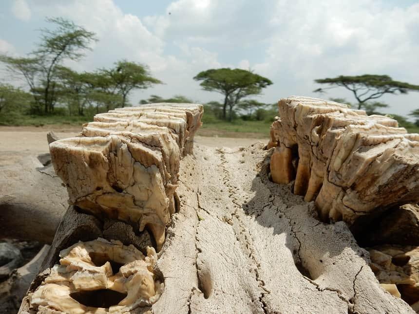 Het is zeker geen straf om te moeten wachten bij het betreden van het Serengeti Park