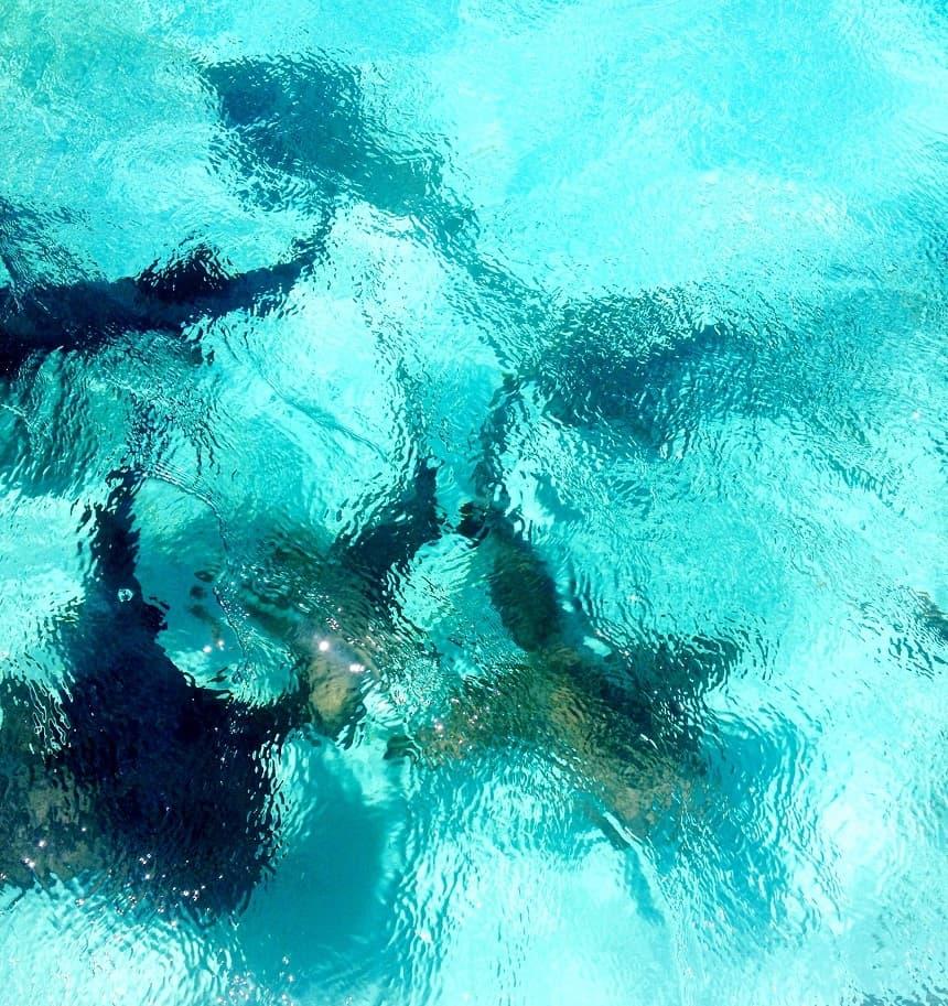 Snorkelen Caye Caulker