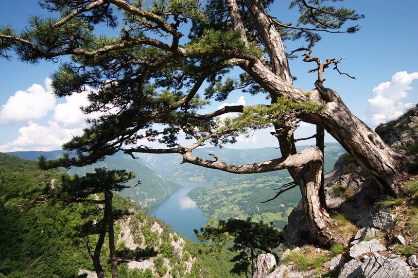 Tara National Park