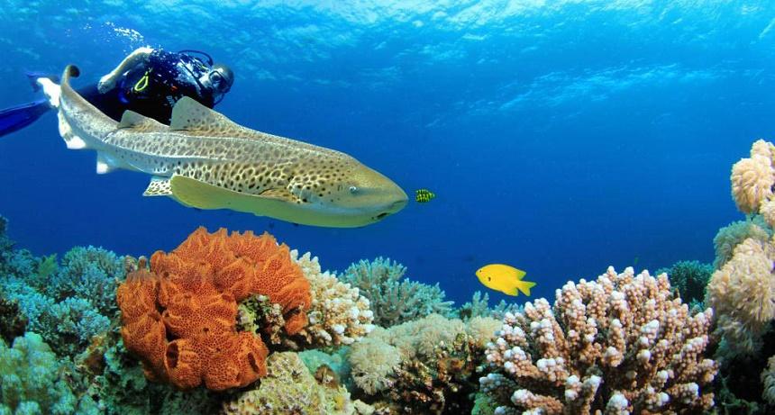 duiken in Oman