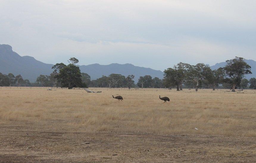 Safari-achtige taferelen onderweg naar Boreang Campground
