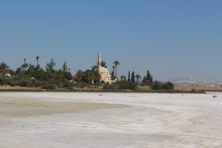 Larnaka: flamingo's en palmbomen
