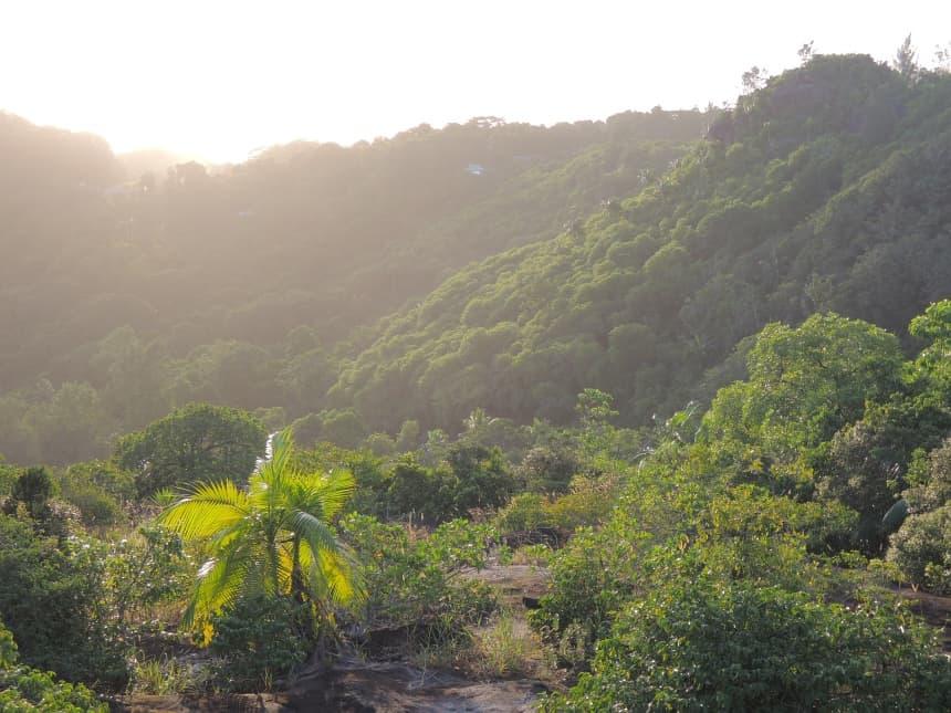 Weelderig groen, met palmen, kruiden zoals kaneel en vanille, mango's en bananen.