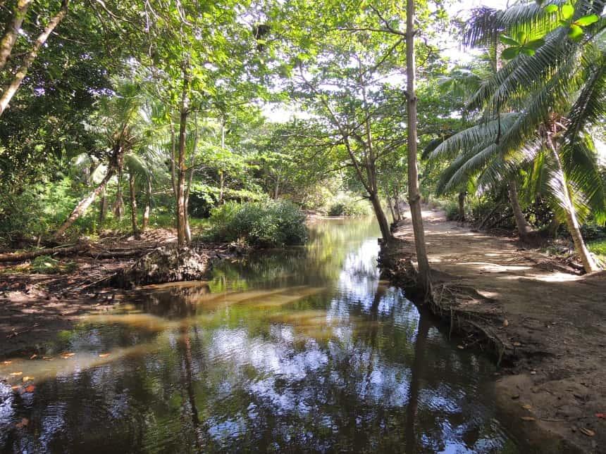 Jungle overal.