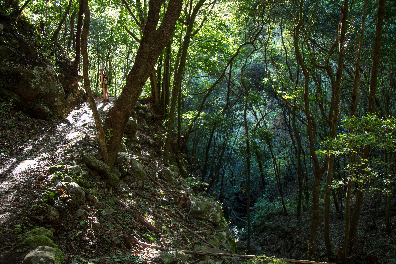 oerbos La Palma