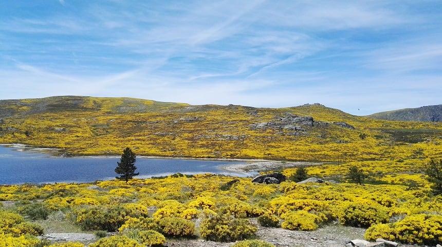 De gele bloemenzeeën kleuren de valleien in de vroege zomer op