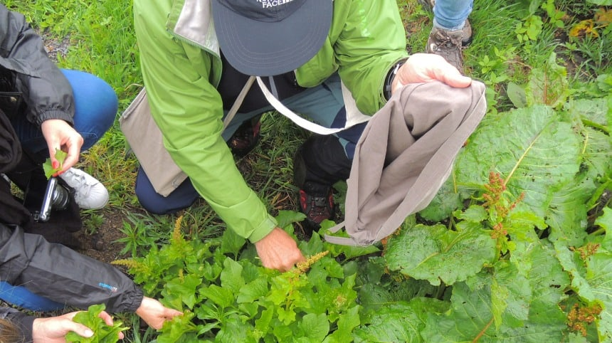 Mijn botanische gids Christophe Anglade plukt wilde spinazie voor de lunch.