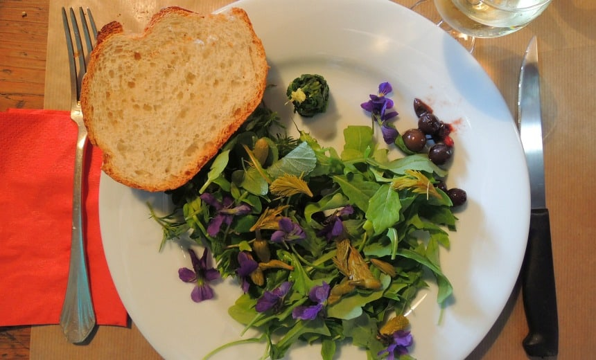 Heerlijk! Een zelf geplukte salade met wel 10 wilde planten en kruiden.