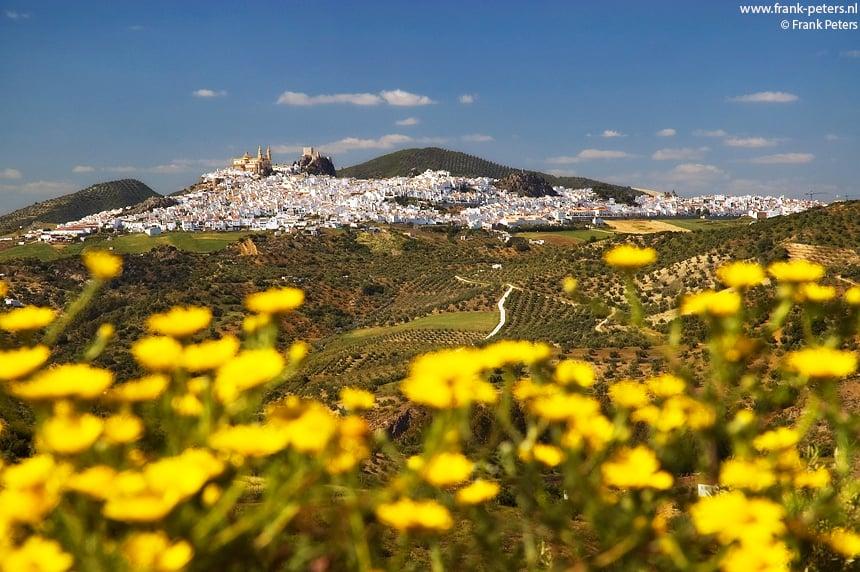 Witte Stad boven Gele Bloemen, Olvera, Andalusie, Spanje