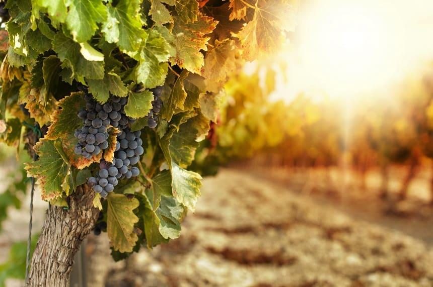 Franse wijn