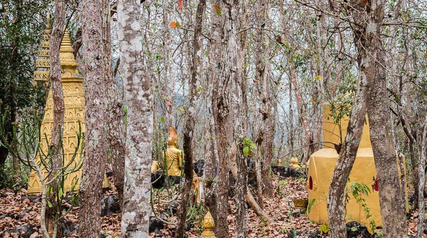Goud schittert tussen de bomen