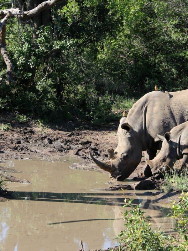 Safari Zuid-Afrika