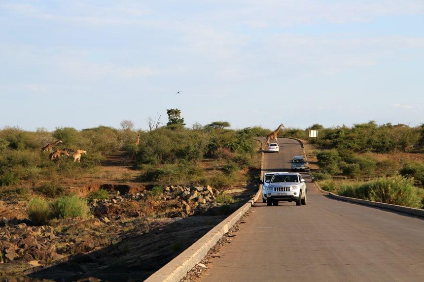 In het Zuid-Afrikaanse Krugerpark kun je gemakkelijk zelf dieren spotten vanuit je huurauto