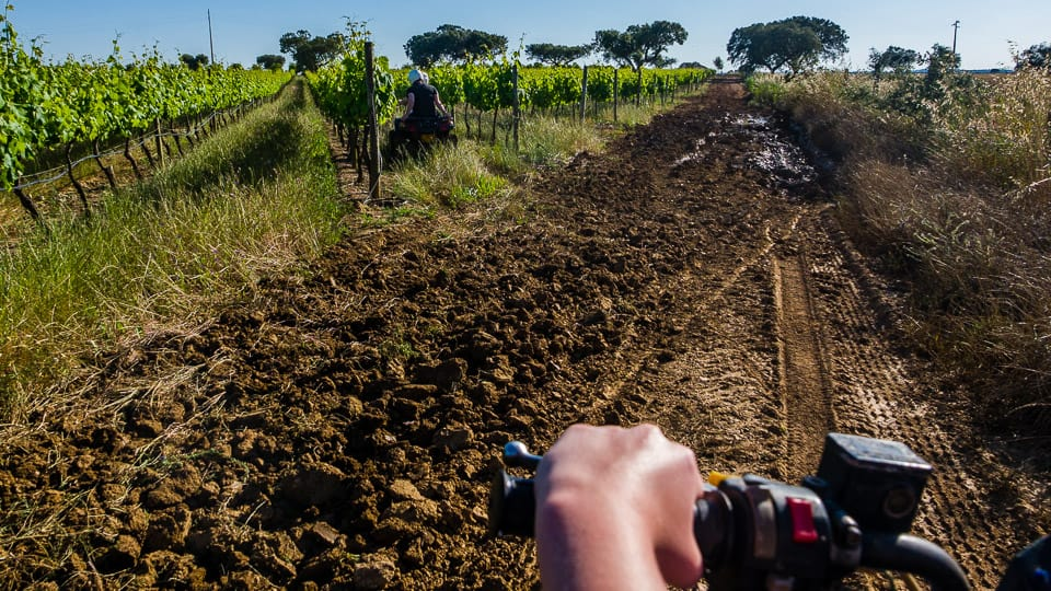 Op de quad door de wijngaard