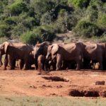 4x op safari in Zuid-Afrika
