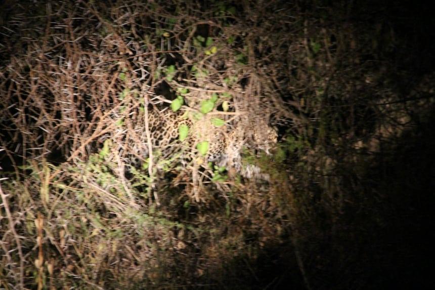 Geluksmoment op safari in Zuid-Afrika: ineens oogjes zien glimmen in het donker!