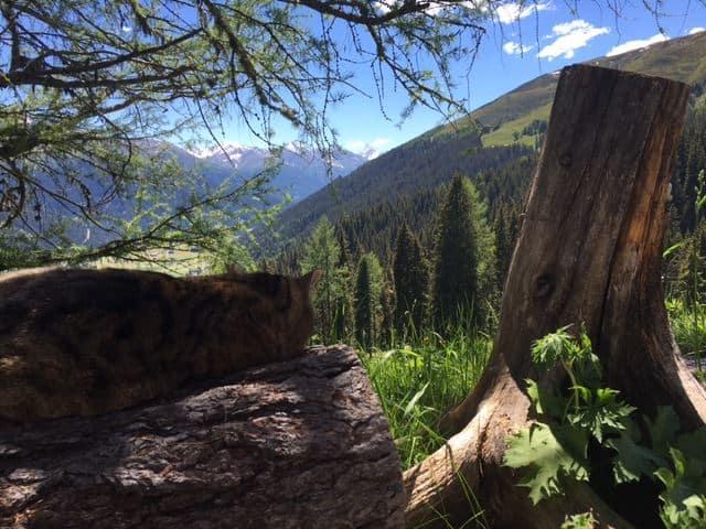 Ook deze kat geniet van de frisse lucht, het mooie uitzicht en het relaxte leven