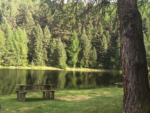 Mooi plekje middenin het bos