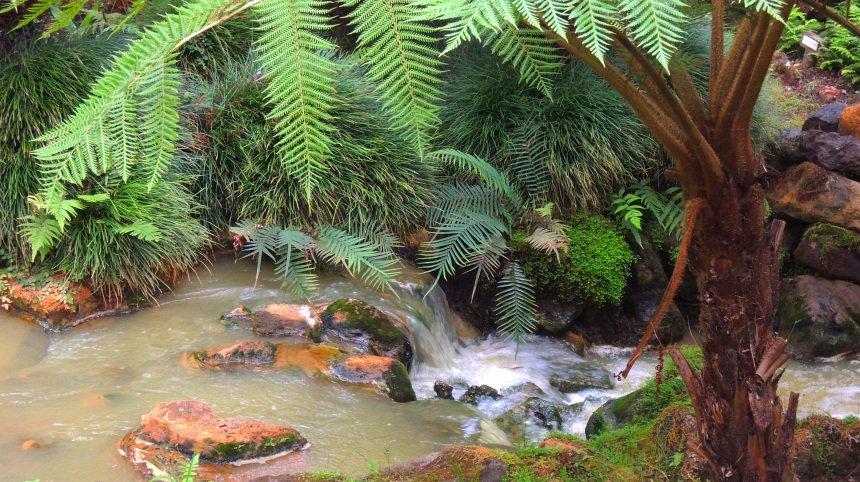Het warme water stroomt overal en zorgt voor bizarre plantengroei.