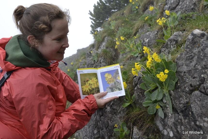 Met de papieren gids en het gps systeem leer je alpenbloemen vinden en herkennen!