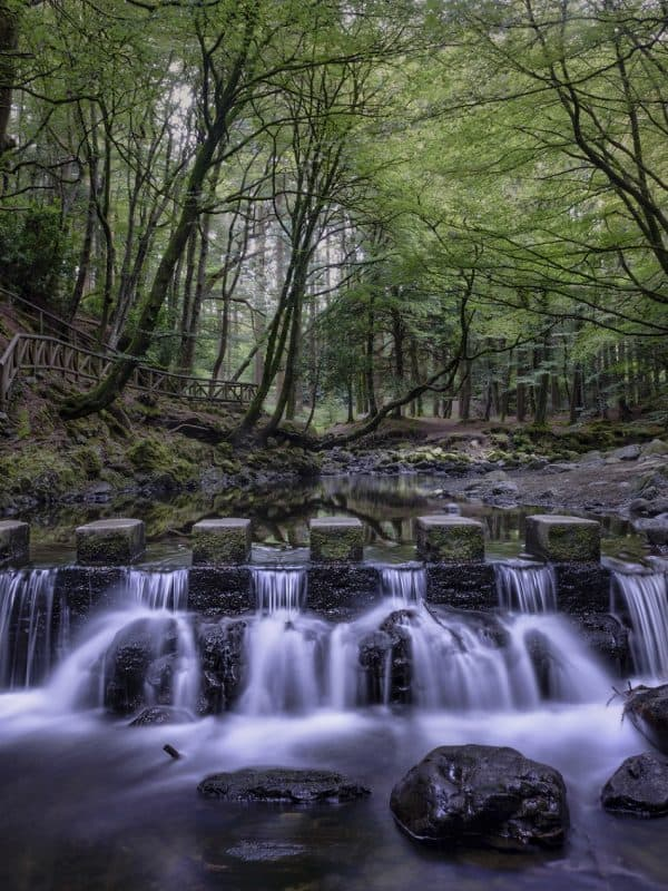 Tollymore-iStock.com - AndySG