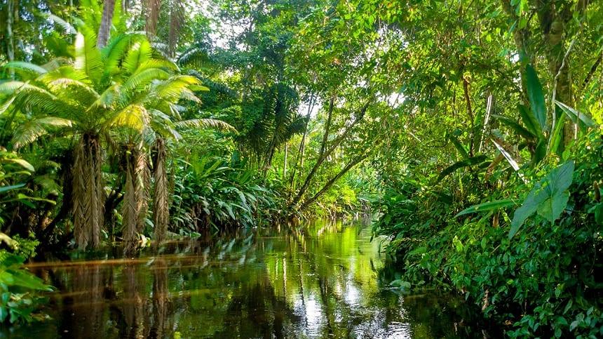 Amazonas Brazilië