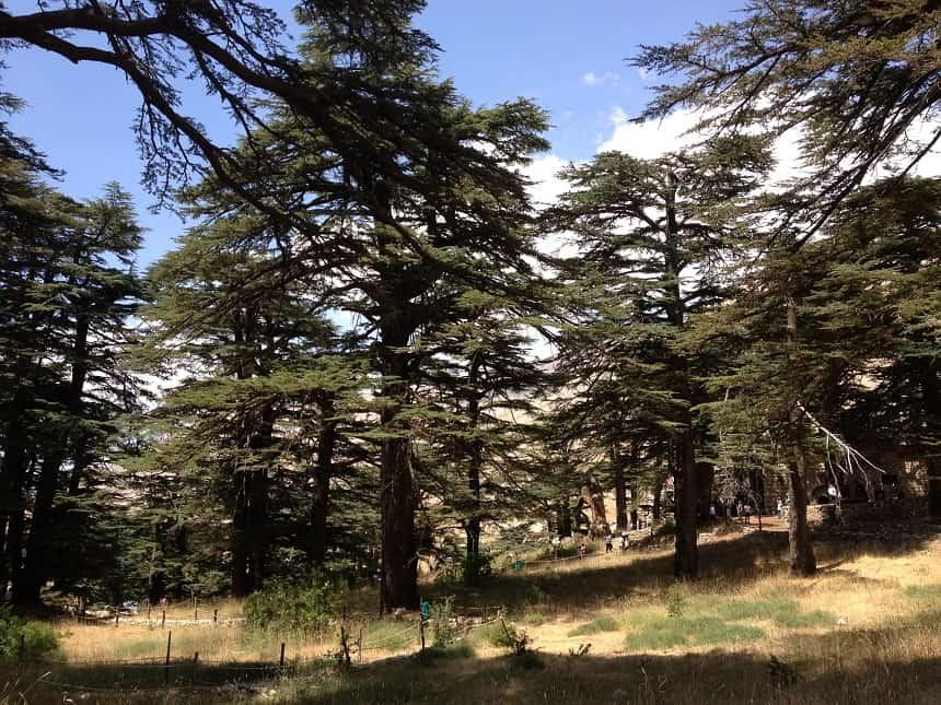 Bcharre cederwouden