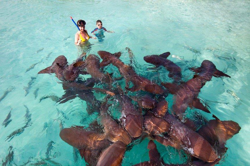 bahamas haaien