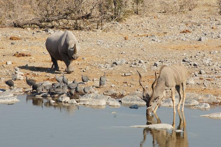 Waterhole camping Halili. Etosha National Park, Namibië