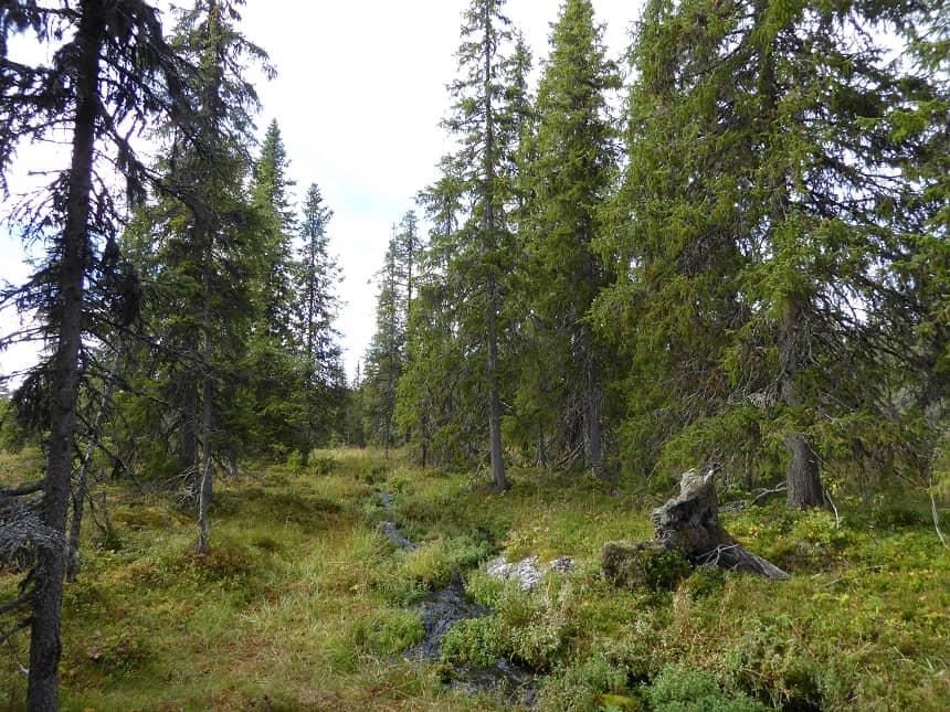 De groene natuur geeft ruimte voor talloze outdooractiviteiten