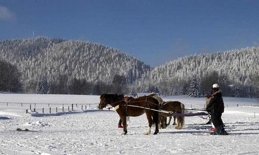 Ski joëring - La Féclaz © Savoie Mont Blanc / Chabance