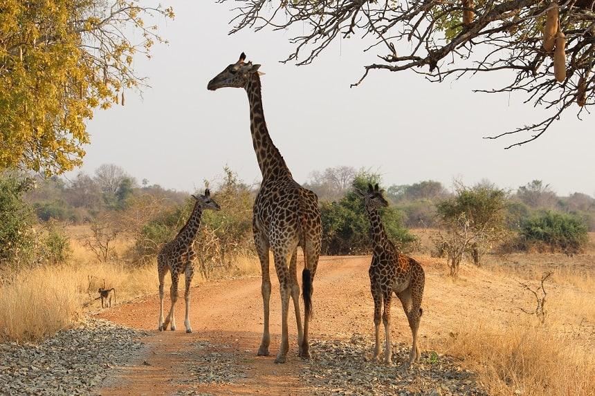 zambia natuurparken