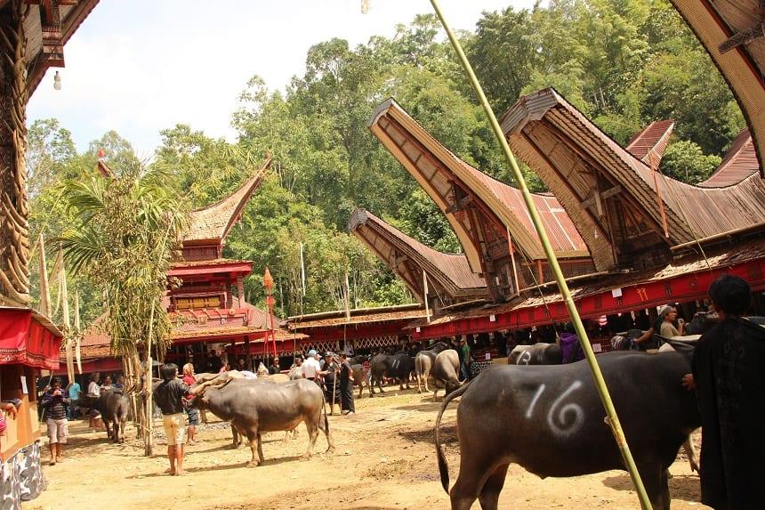 dodenvereringsrituelen Tana Toraja's