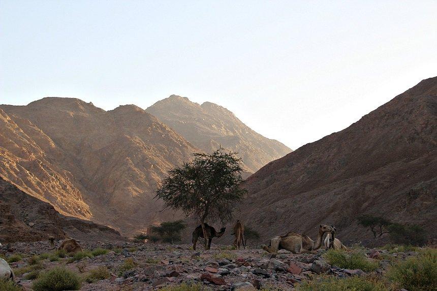 Een van de afwisselendste woestijnen