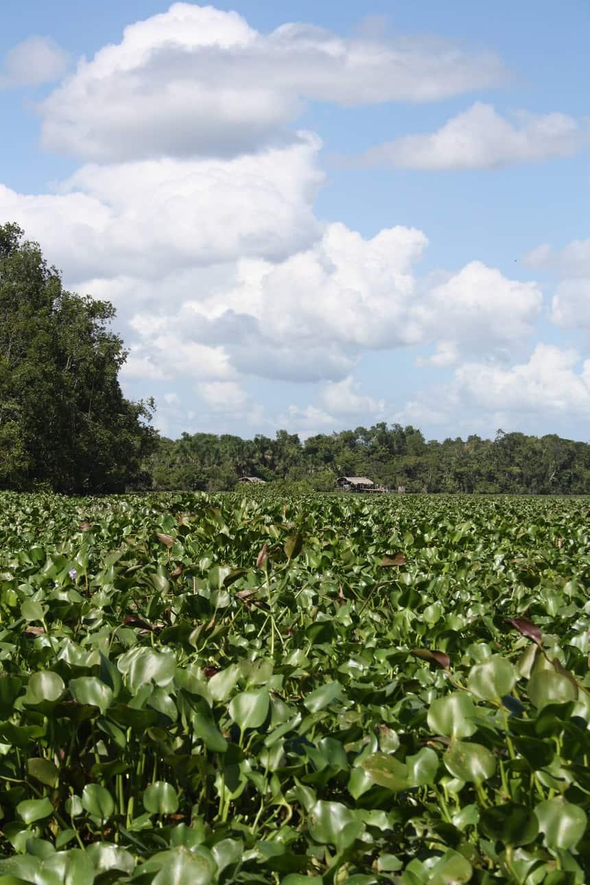 Orinoco-delta