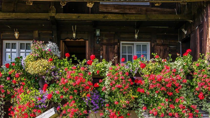Kleurrijke bloemenpracht voor de veranda