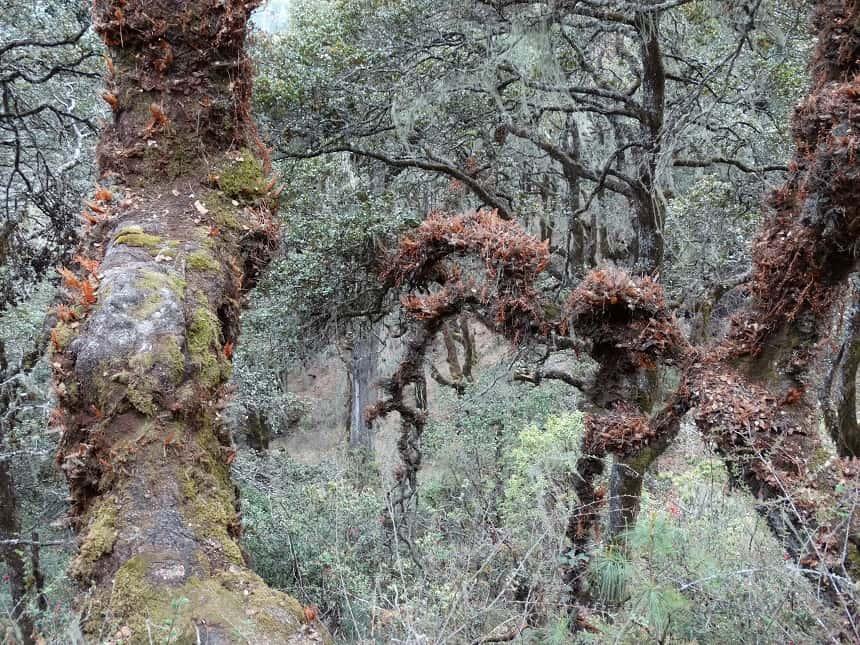 Zo ziet een bos in Bhutan eruit, waar 60% van het land met oorspronkelijk bos is bedekt. Op weg naar Tiger's Nest