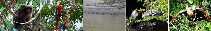 """Aapjes, ara's, een Capibara familie, een slangenhalsvogel en een """"prehistorische"""" Hoatzin"""